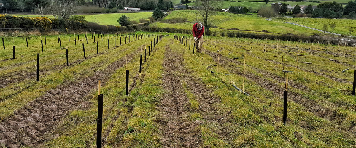 Planting Trees Forestry Northern Ireland