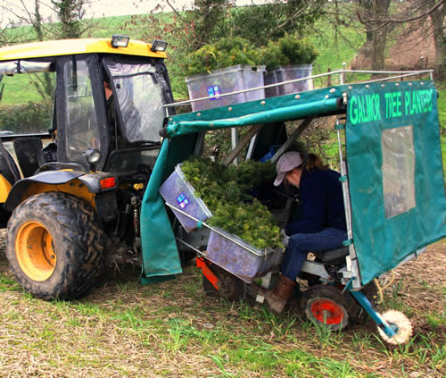 Forestry Services Tree Planting Services