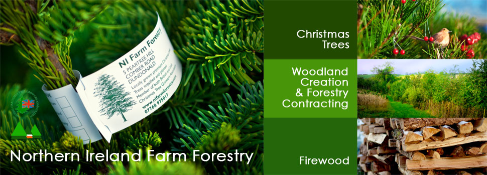 Farm Forestry - Planting and Maintenance, Christmas Trees