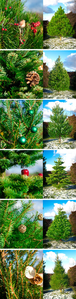 Christmas Trees, Wreaths and Table Settings