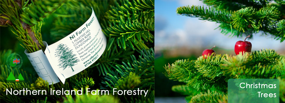 Christmas Trees Retail and Wholesale / Trade